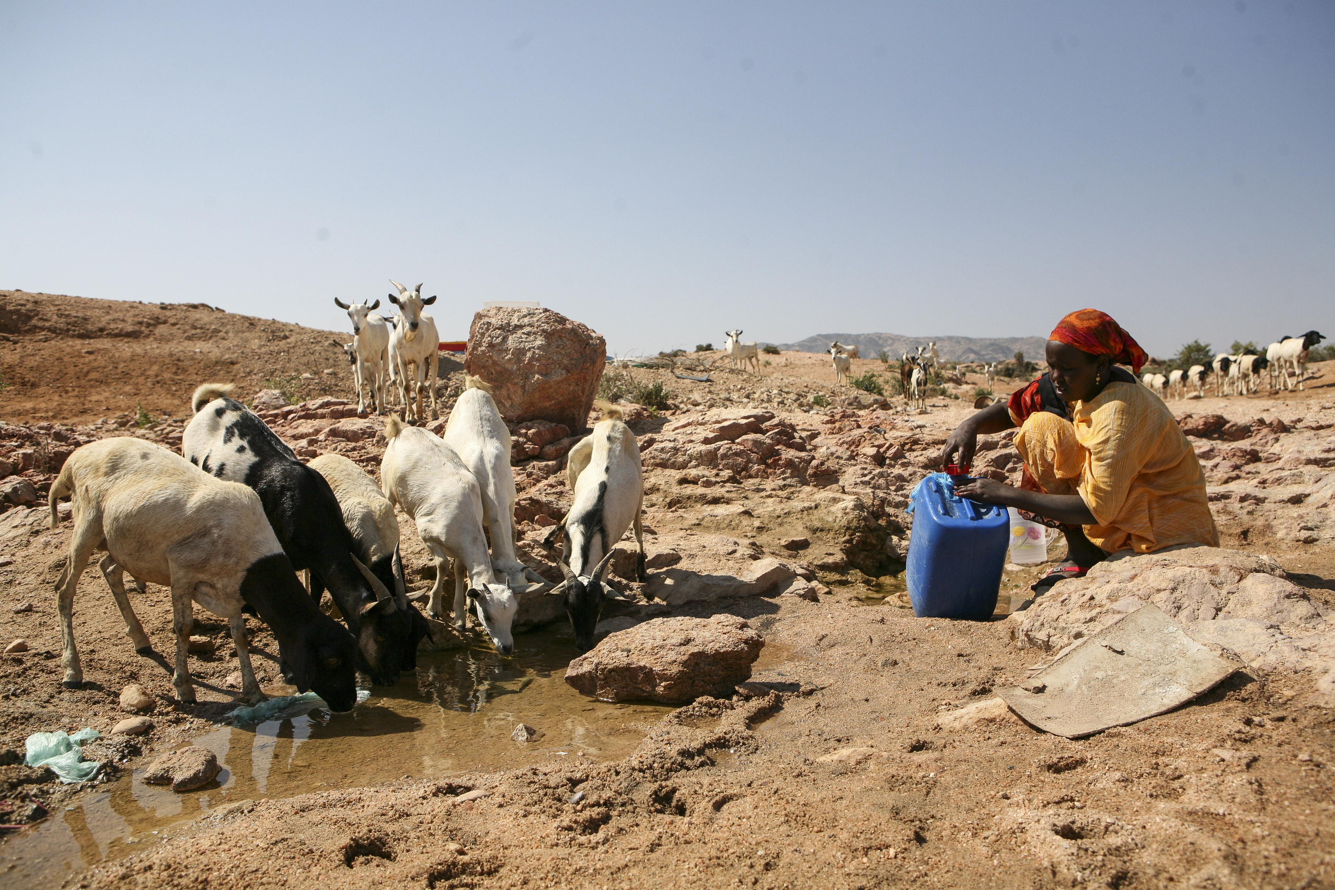 undp-so-drought-water-woman-livestock.jpg.pagespeed.ce.XyuDiBZdXL